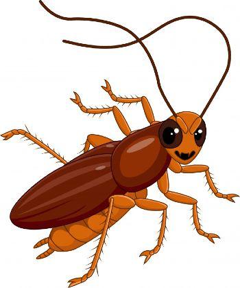 Insectos similares a las cucarachas