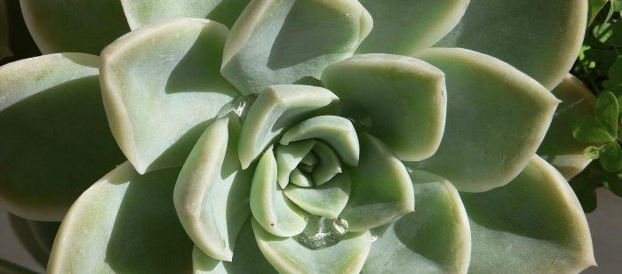 Plantas parecidas a la yuca